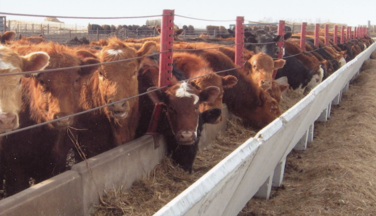 Figure 112. Feedlots