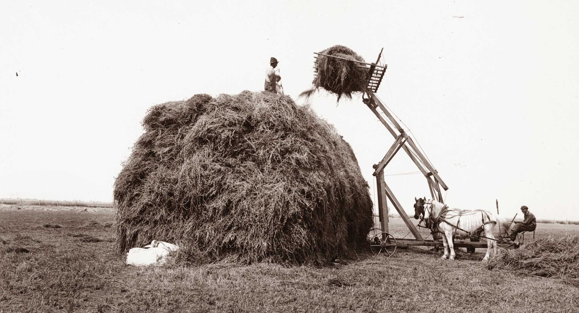 Figure 30. Men and horses stack hay
