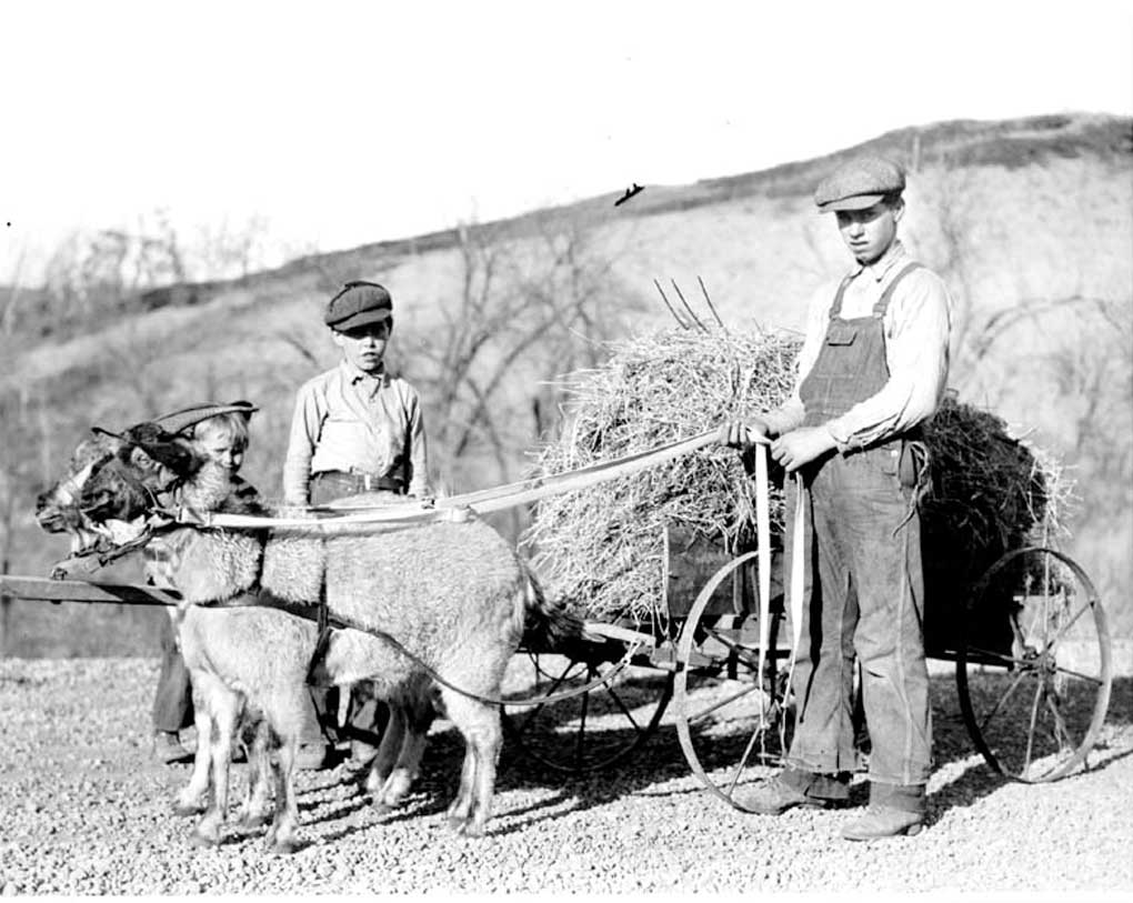 Figure 44. Two boys beside a wagon full of hay