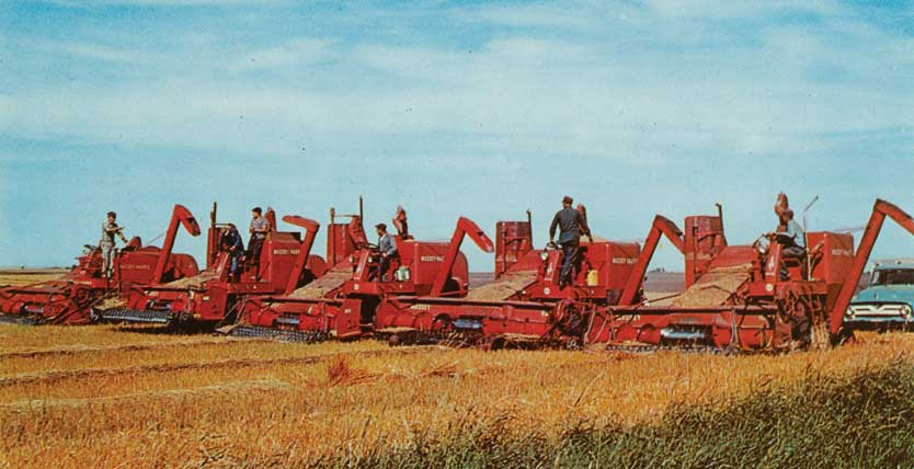 Figure 57. A row of Massey Harris combines