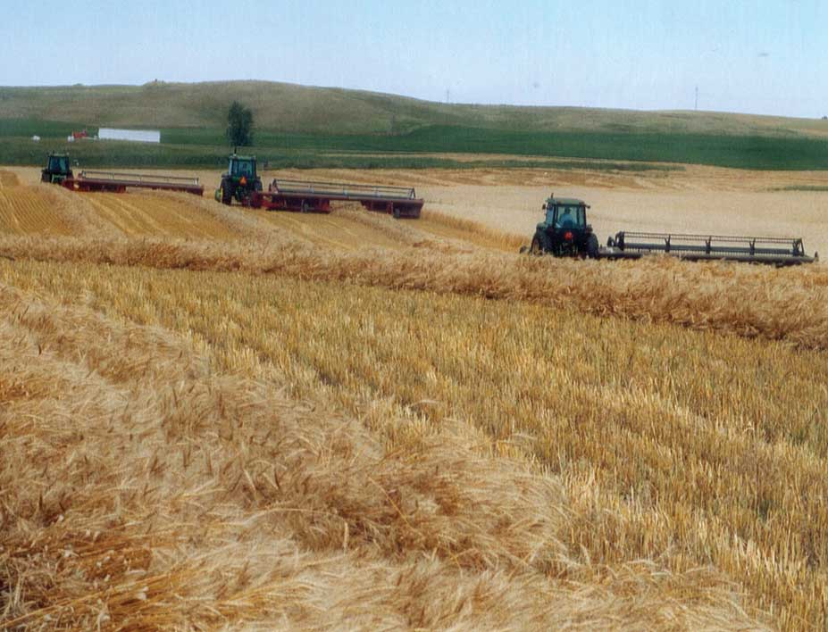 Figure 69. Swathing a field of wheat