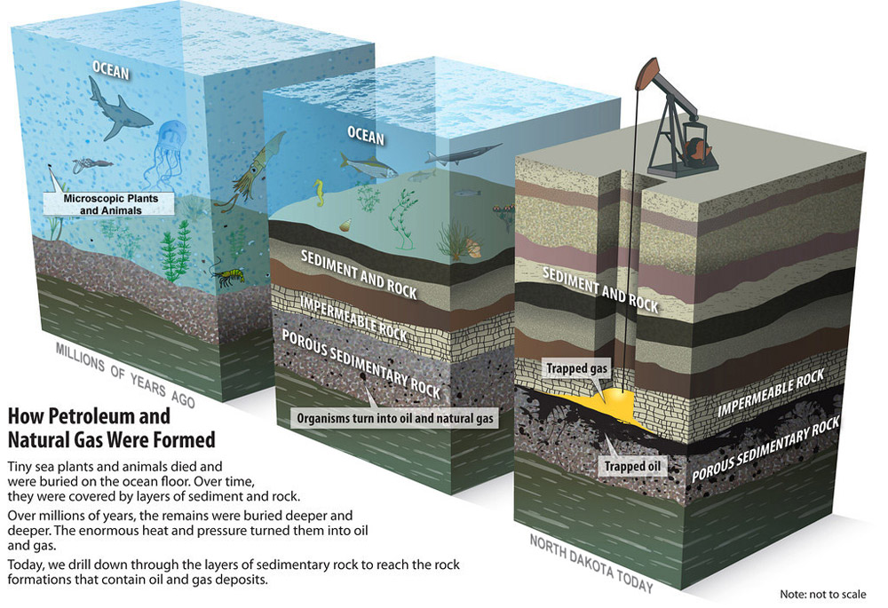 How Petroleum Formed