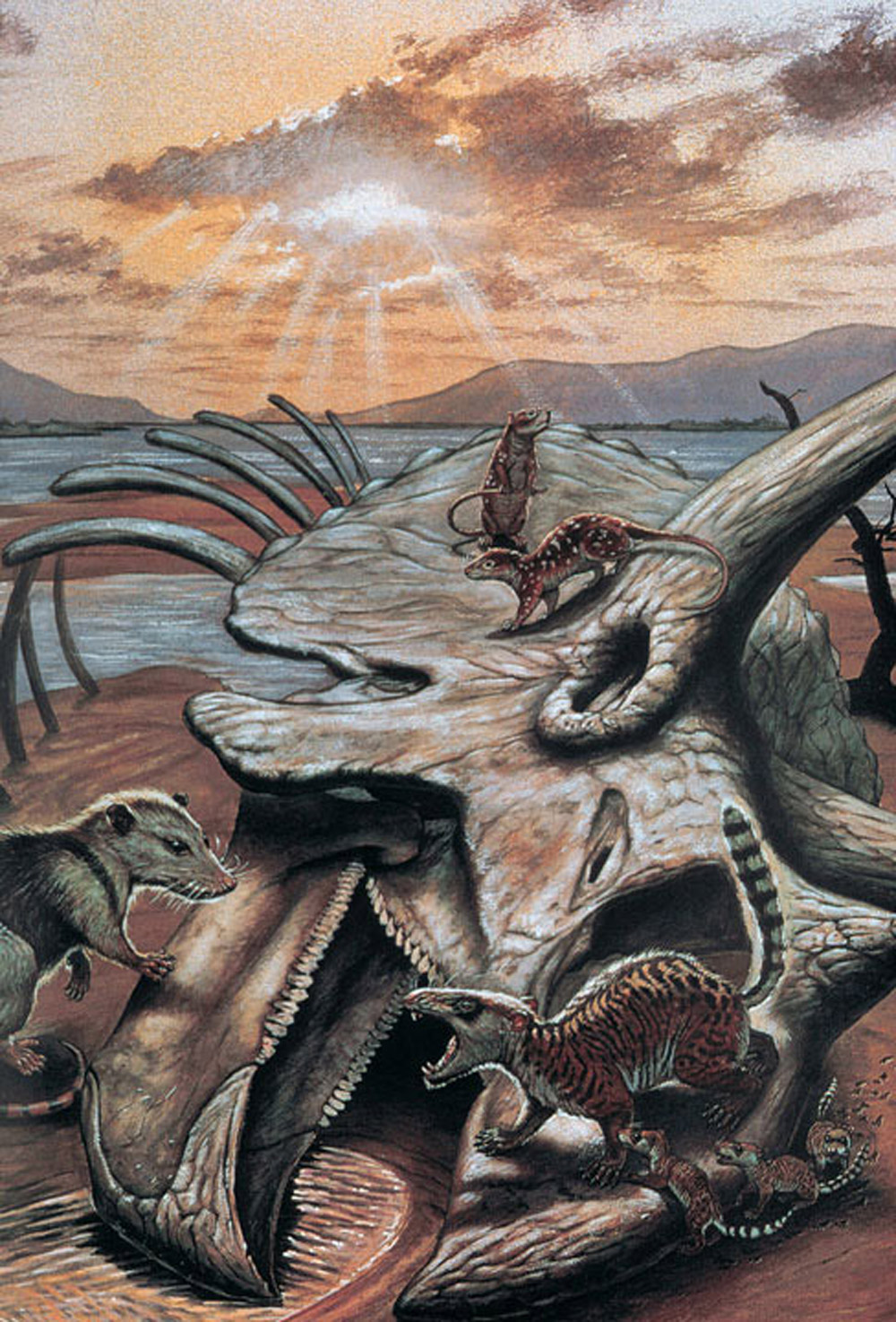 the cretaceous period and the aftermath The last days of dinosaurs during the cretaceous period, caused by a  in the  aftermath, about three-quarters of all species on earth died out.