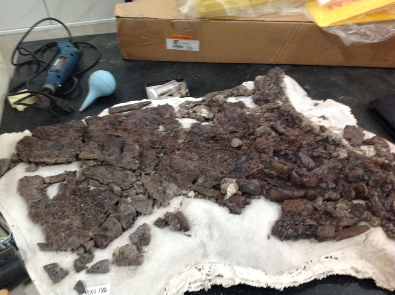 If a fossil arrives in the lab as crushed as this crocodile skull, it may not offer much new information on crocodiles and probably cannot be re-constructed. Some bones can be made whole by adding molded or sculpted pieces to complete the bone.