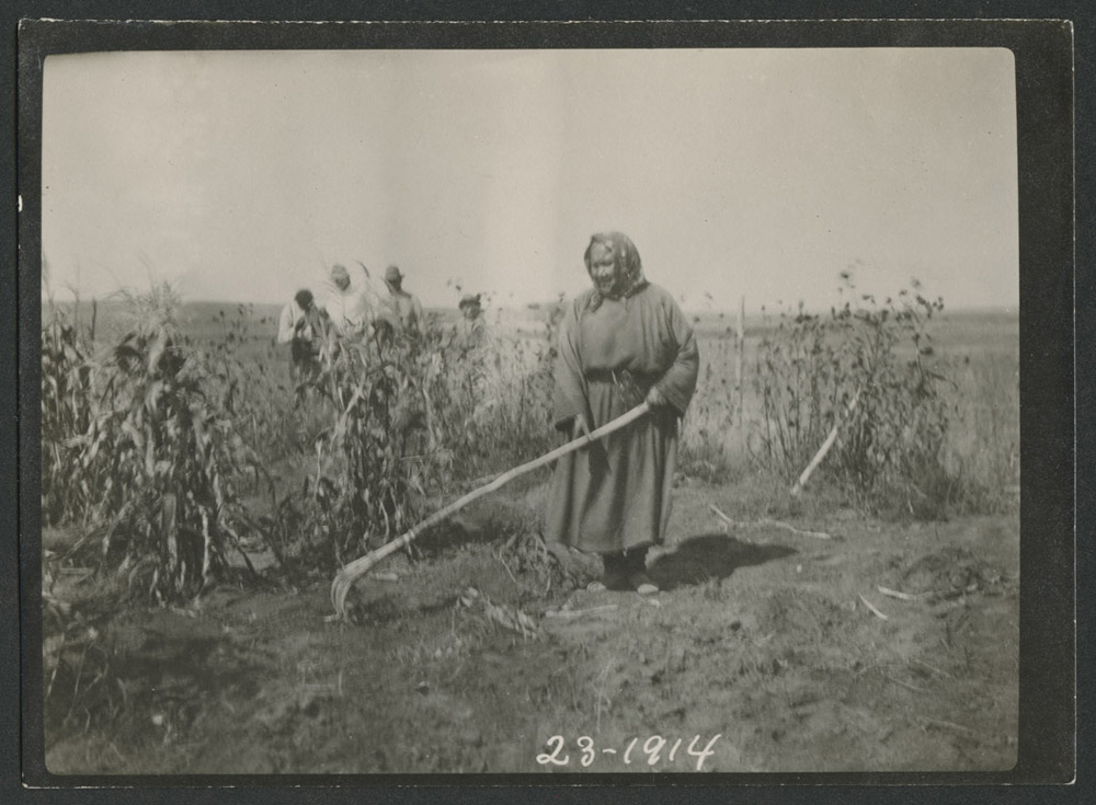 Indian woman using antler rake Fort Berthold Indian Reservation 1914