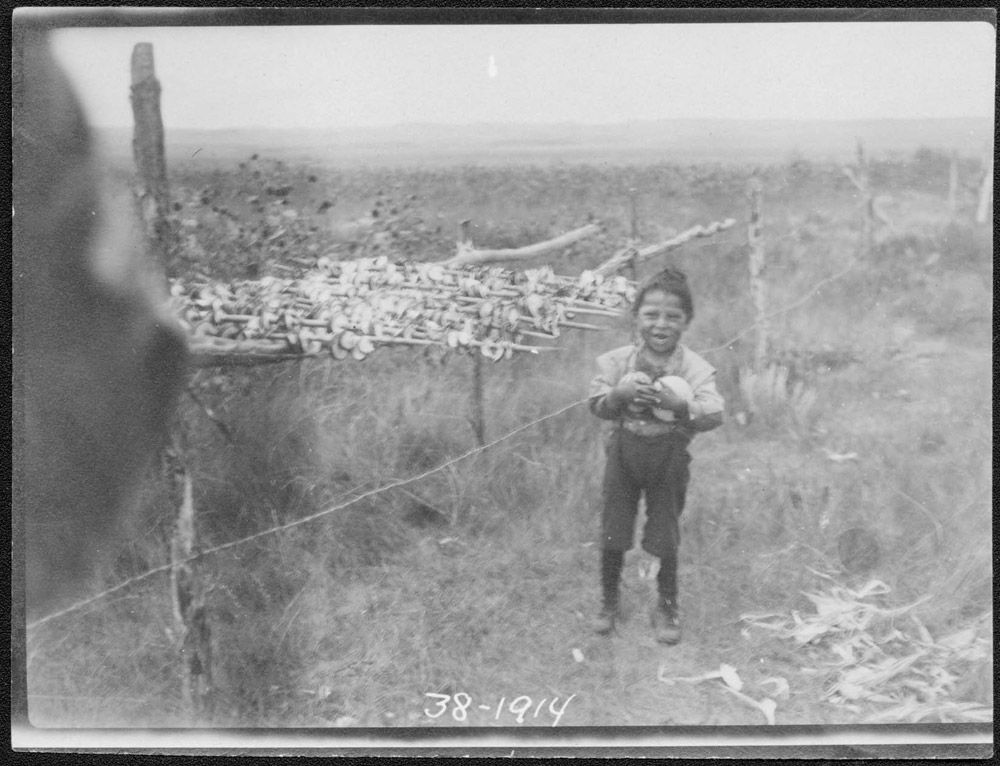 Wolf Chief son stringing squash 1914